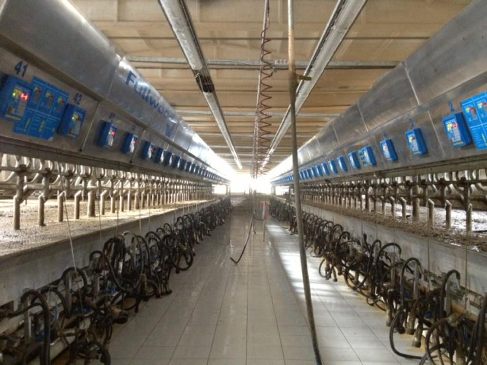 Şekersüt Çiftliği Sağımhane Yapımı    3MC Yapı